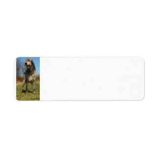 irish-wolfhound-full return address label