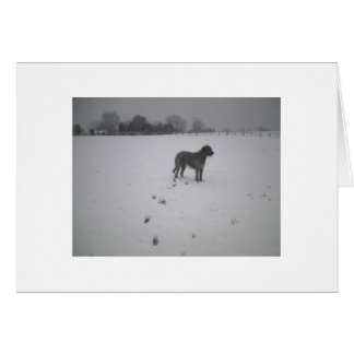 Irish wolfhound in the snow card