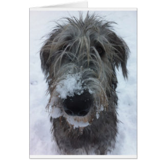 irish wolfhound playing in the snow cards