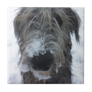 irish wolfhound playing in the snow tiles