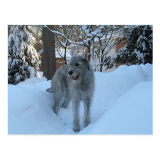 Irish wolfhound post card