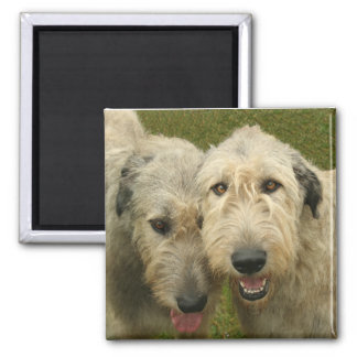 Irish Wolfhound Square Magnet
