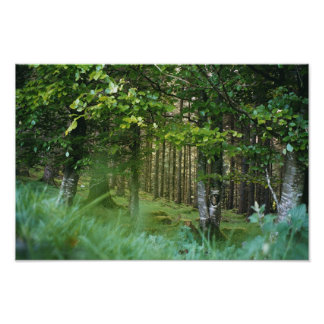 Irish Wood Poster