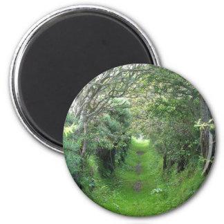 Irish Woodlands in Ireland Magnet