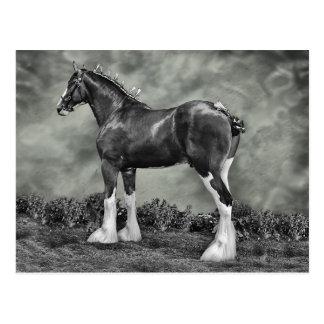 Iron Horse Steele Postcard
