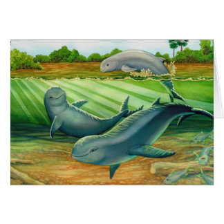 Irrawaddy or Mekong River Dolphin Card
