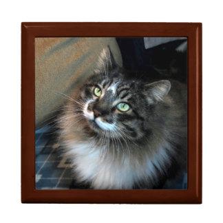 Irresistible Cat Zorro Jewelry and Keepsake Box