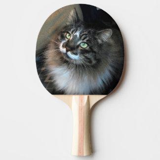 Irresistible Cat Zorro Ping Pong Paddle