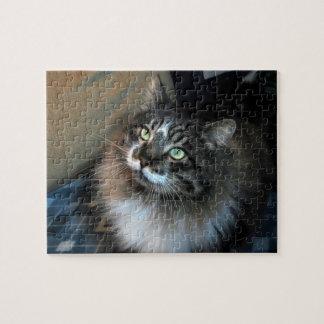 Irresistible Cat Zorro Puzzle
