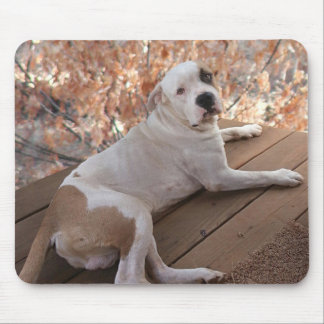 Irresistible Porch Dog Mouse Pad