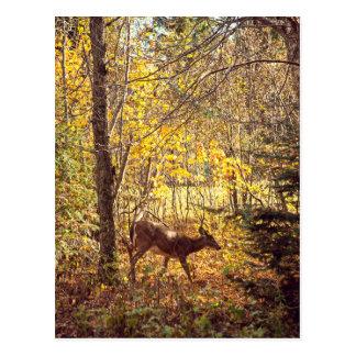 Is tickled pink - National park of Mount-Trembling Postcard