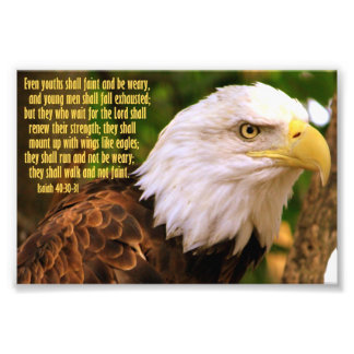 Isaiah 40:30-31 with Bald Eagle Photo Print