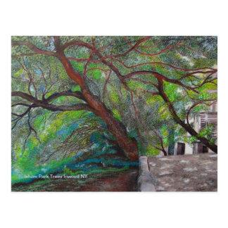 Isham Park Trees Postcard