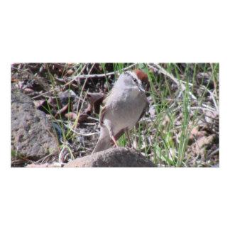 Ishawooa Wyoming Fauna Animals Birds Aves Winged Custom Photo Card