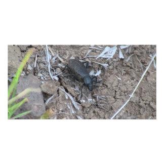 Ishawooa Wyoming Fauna Insects Arachnids Personalized Photo Card