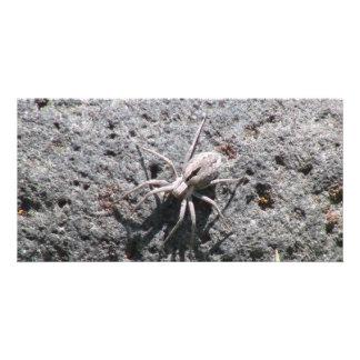 Ishawooa Wyoming Fauna Insects Arachnids Photo Card