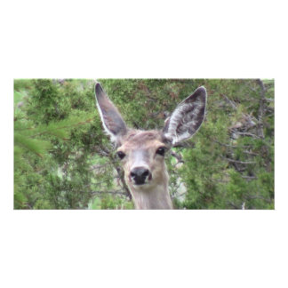 Ishawooa Wyoming Fauna Mammals Deer Pronghorn Elk Photo Card