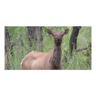 Ishawooa Wyoming Fauna Mammals Deer Pronghorn Elk Customized Photo Card