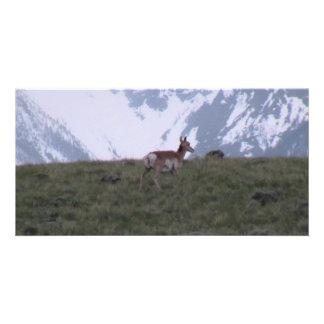 Ishawooa Wyoming Fauna Mammals Deer Pronghorn Elk Picture Card