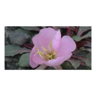 Ishawooa Wyoming Flora Wildflowers Flowers Botany Personalized Photo Card