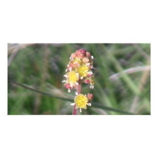 Ishawooa Wyoming Flora Wildflowers Flowers Botany Picture Card