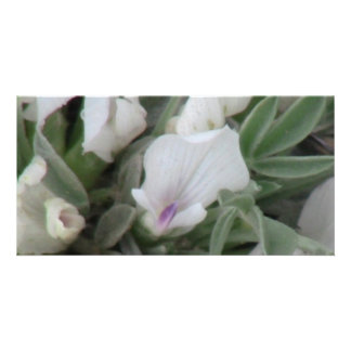 Ishawooa Wyoming Flora Wildflowers Flowers Botany Customized Photo Card
