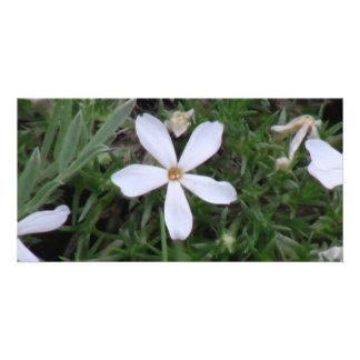 Ishawooa Wyoming Flora Wildflowers Flowers Botany Photo Card Template