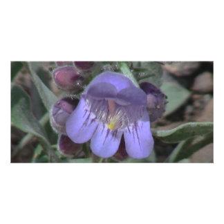 Ishawooa Wyoming Flora Wildflowers Flowers Botany Custom Photo Card