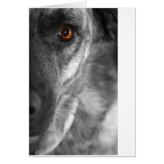 Isis the Devious Dog Card