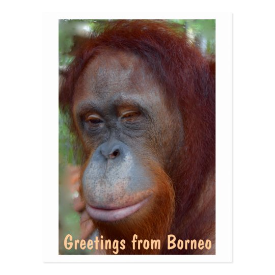 Island of Borneo Orangutan Postcard