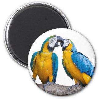 isolated ara ararauna parrot 6 cm round magnet
