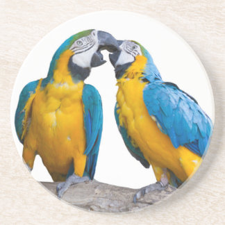 isolated ara ararauna parrot beverage coasters