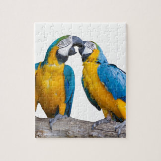 isolated ara ararauna parrot jigsaw puzzle