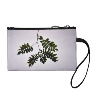 Isolated dark green leaves branch coin wallets
