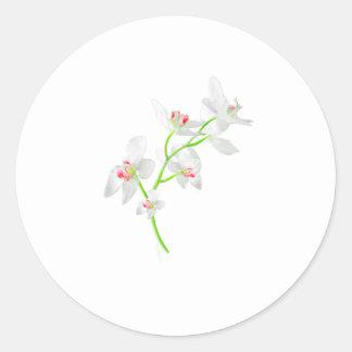 Isolated Orquideas Blossom Classic Round Sticker