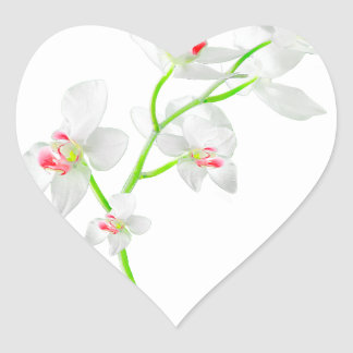 Isolated Orquideas Blossom Heart Sticker