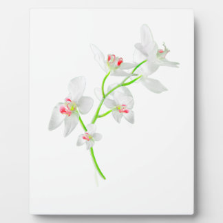 Isolated Orquideas Blossom Plaque