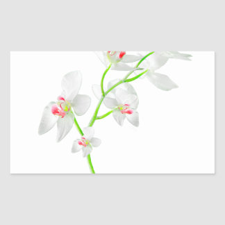 Isolated Orquideas Blossom Rectangular Sticker