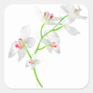 Isolated Orquideas Blossom Square Sticker