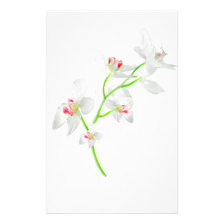 Isolated Orquideas Blossom Stationery