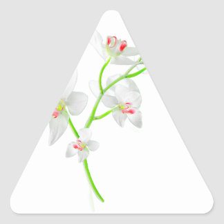 Isolated Orquideas Blossom Triangle Sticker