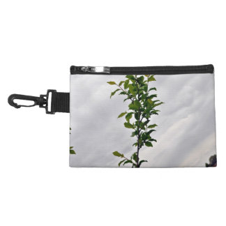 Isolated Plant Against Cloudy Sky Accessory Bag