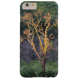 It arvore to the one for of the sun barely there iPhone 6 plus case