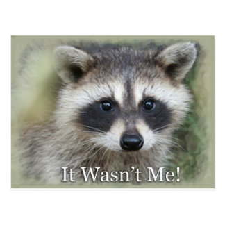 It Wasn't Me! Postcard