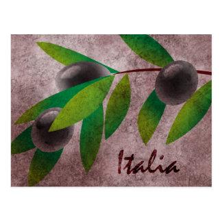 Italia Olives Postcard
