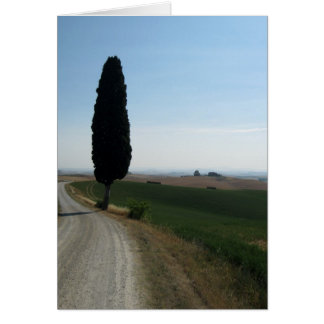 Italian Cypress Note Cards