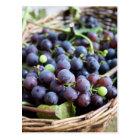 Italian Grapes Postcard