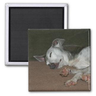 "Italian Greyhound Magnet - ""Max"""