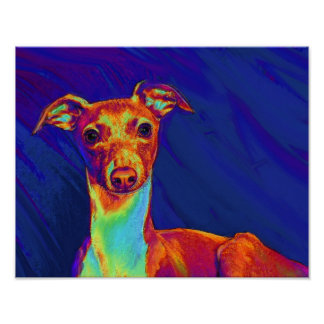 italian greyhound puppy poster