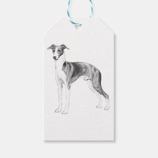 Italian Greyhound Style